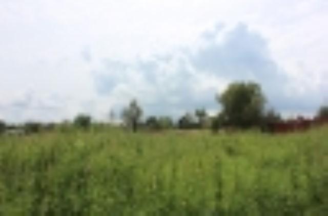 Участок в д. Шемякино